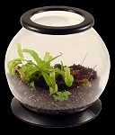 Carnivorous Plant Terrarium Kit - Large Temperate