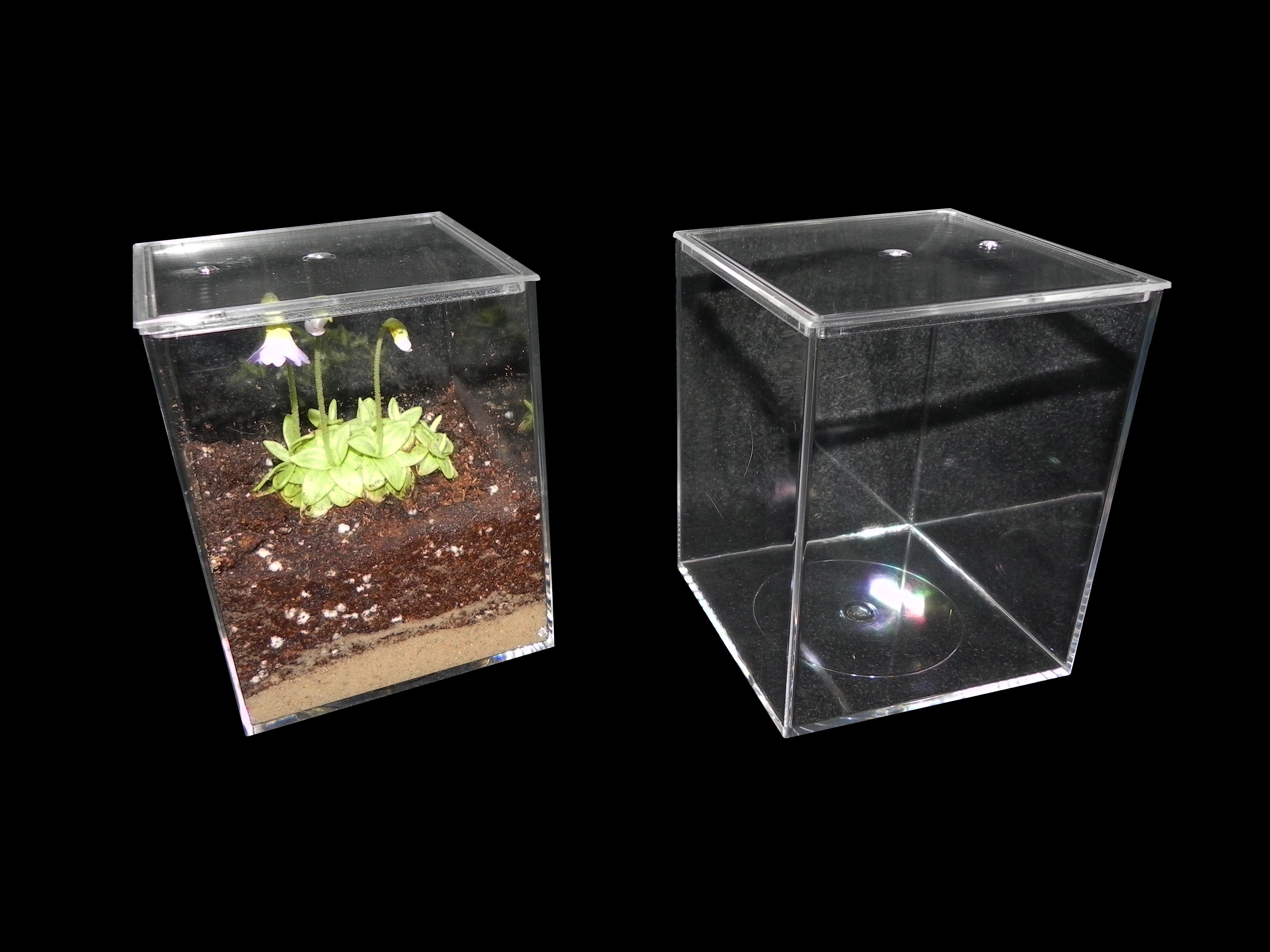 Carnivorous Plant Terrarium 4 X 4 X 5 Inch Cube