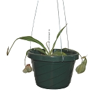 6-inch Hanging Basket - green