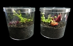 Round Terrarium Kit with 3 different plants - NEW ITEM!