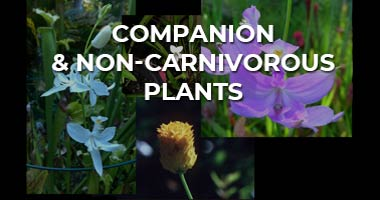 Companion and Non-Companion Plants