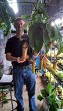 Nepenthes 'Miranda' - JUMBO Hanging Basket - BACK IN STOCK!!