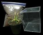 Sundew Terrarium Kit - Everything you need in one item!