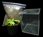 Venus Flytrap Terrarium Kit - Everything you need in one item!